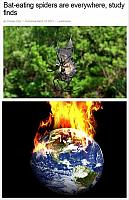 bat-eating-spiders-burn-the-world