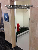 bathroom-for-dogs